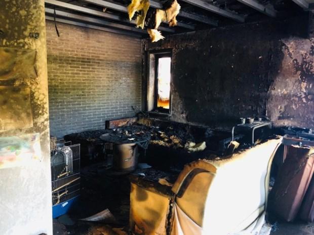 Twee appartementen onbewoonbaar na hevige brand in Koersel