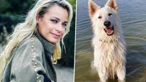 An Lemmens start zoekactie naar hond die verdween bij verkeersongeval