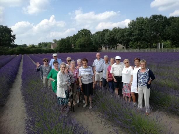 Vief Alken naar de lavendelhoeve