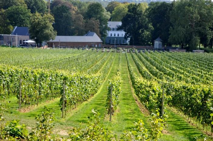 Limburg tweede grootste wijnprovincie van het land