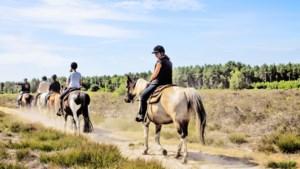 Op avontuur in de Limburgse natuur: suppen, segwayen in het bos of te paard over de prairie