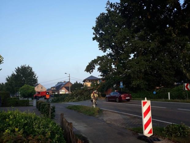 Kazernelaan tijdlang afgesloten nadat tak afbreekt en op auto valt
