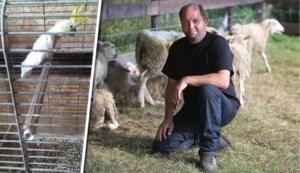 Pastoor Montenaken dreigt wapen boven te halen tijdens inbeslagname van zijn huisdieren