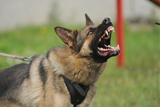 Politie schiet drie agressieve honden dood die vrouw aangevallen hadden