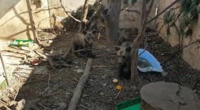 Natuurhulpcentrum zoekt steun om twee moederloze babybeertjes uit Albanië te redden?