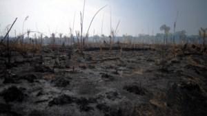 """Brazilië weigert noodhulp van G7: """"Middelen kunnen misschien relevanter zijn voor herbebossing van Europa"""""""