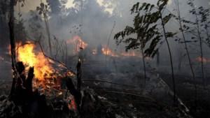 """Branden in Amazonewoud """"onder controle"""" volgens Braziliaanse minister van Defensie"""