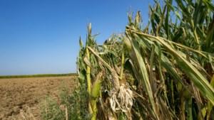 Vlaamse landbouwers krijgen bijna 31 miljoen schadevergoeding voor droogte van 2018