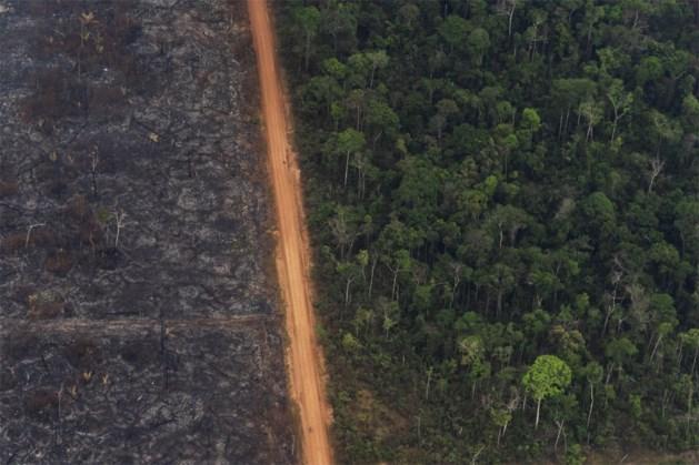 """Greenpeace: """"Brazilië brandt, ook voor 'vlees van bij ons'"""""""