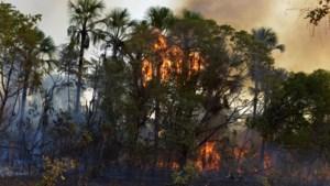 H&M koopt voorlopig geen leder meer uit Brazilië door bosbranden
