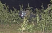 Bestuurder crasht met BMW X5 in perenplantage