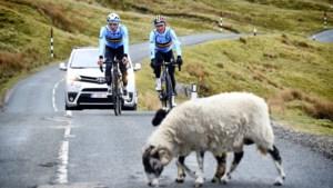 WK wielrennen in Yorkshire: bekijk hier het volledige programma
