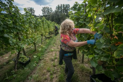 Wijndomein Schorpion haalt hoogst aantal gouden medailles binnen