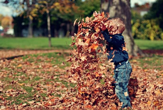 Waarom u de herfstbladeren in uw tuin best laat liggen