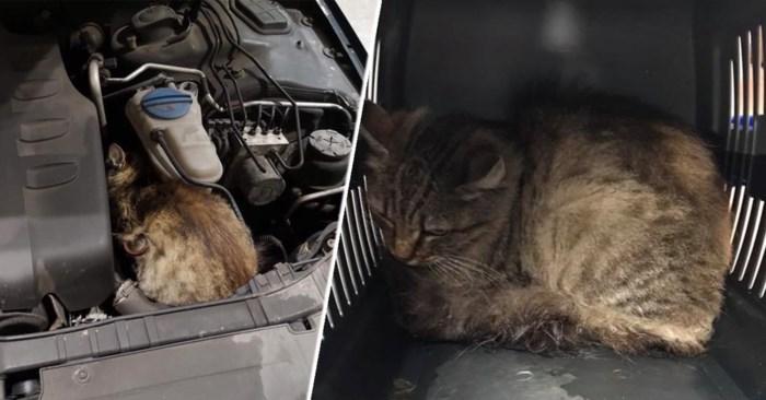 Garagist maakt testritje met wagen en ontdekt dan kat onder motorkap