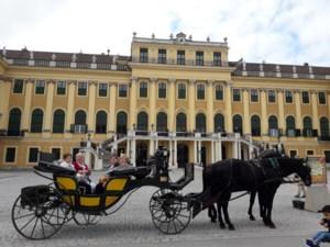 Neos Kinrooi naar Wenen