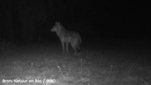 Politiedrone betrapt jagers met schietklaar jachtgeweer in wolvengebied