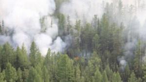 Na twee maanden strijden: 'zwaarste bosbranden ooit' in Siberië eindelijk geblust