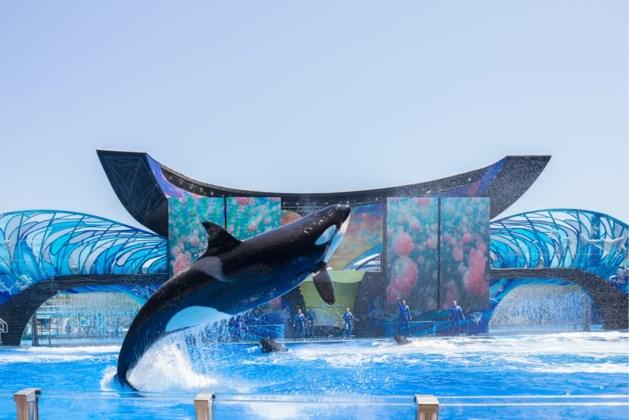 TripAdvisor staakt verkoop van tickets voor shows met walvissen