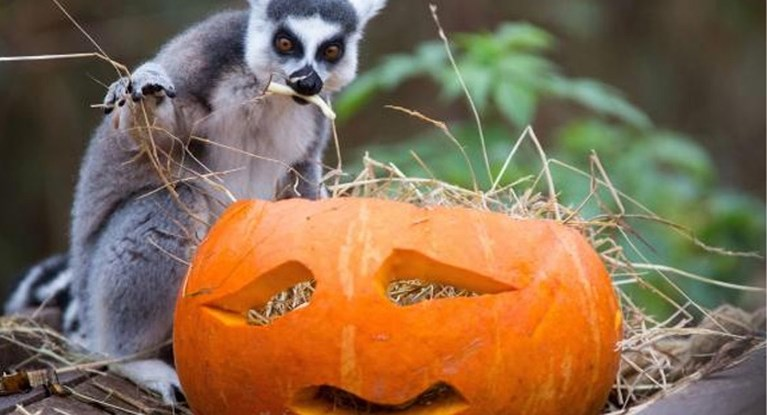 Dit doen de pretparken voor Halloween