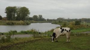 Grondwaterstand stijgt voorzichtig, behalve in Limburg