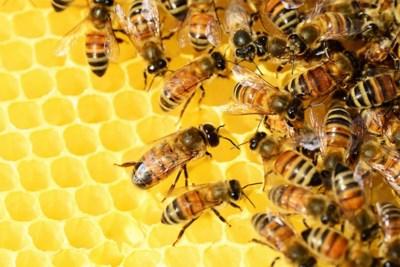 Mislukte imker steelt 150.000 bijen in Tessenderlo