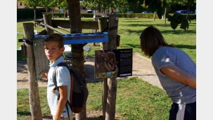 Gemeente schiet bedreigde eikelmuis te hulp in Mettekoven