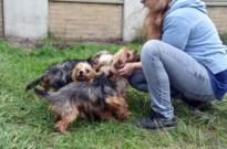 Weer honden in beslag genomen bij veroordeelde broodfokker