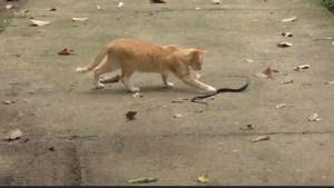 """Kat gaat strijd aan met slang """"om kinderen te beschermen"""""""