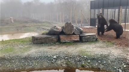Beren uit het Natuurhulpcentrum voelen zich meteen thuis in Ierland