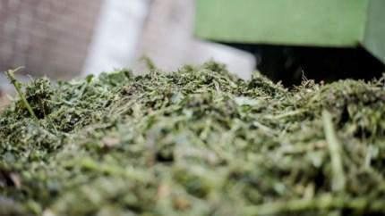 Wietplantage ontdekt in huis op weg tussen Eisden en Leut