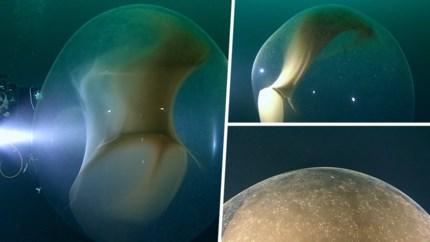 Duikers bezoeken wrak van oorlogsschip, maar ontdekken iets erg zeldzaam op terugweg