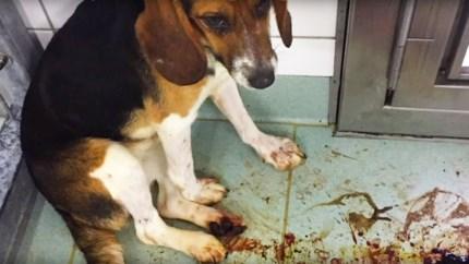 Harde undercoverbeelden: achtergelaten hond sterft, aap wordt tegen deurpost gegooid