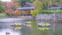 Chrysantenfestival kleurt Japanse Tuin