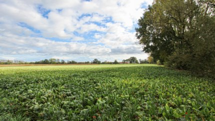 Na 40 jaar weer plannen voor ontgrinding Vijverbroek in Kessenich
