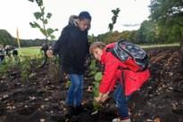 Lommel plant 7.500 bomen aan vlakbij Sahara