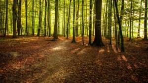 Limburgse houthandelaar op heterdaad betrapt bij grote boomdiefstal