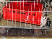 Twee kittens in beslag genomen omdat ze in te kleine kooi zaten