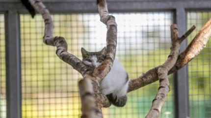 Waarom Limburg achterop hinkt bij de verplichte sterilisatie van katten