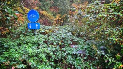 Toch zo bedoeld: mysterie over overwoekerde fietspadborden is opgelost