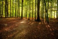 Dieven bijna weg met zeven bomen van Kinrooienaar