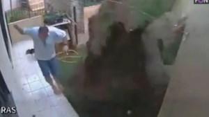 Kakkerlakken bestrijd je best niet zo: man blaast halve tuin op met benzine