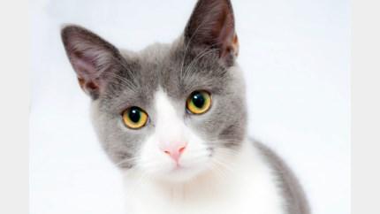 Chiplezer om huisdieren te identificeren