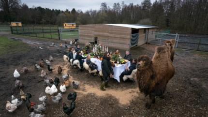 Documentaire toont 'kippenkunstenaar' Koen Vanmechelen zoals u hem nooit zag