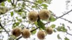 Fruitsector wil peren in Japan verkopen: