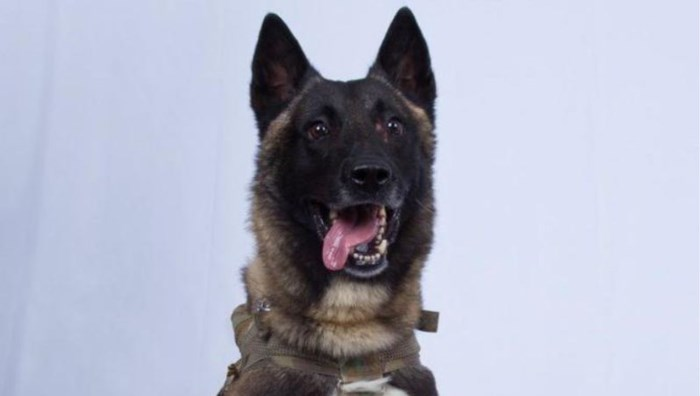 Nederlandse hond dreef IS-leider Al Baghdadi in het nauw