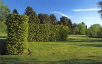Nieuwe parkbegraafplaats ligt midden in het groen