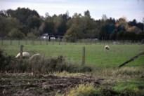 Twee schapen doodgebeten in weide op de Wauberg