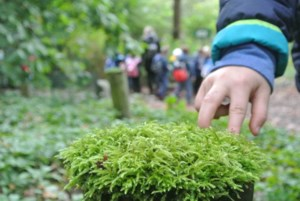 Kleuters van De Lettermolen ontdekken het bos