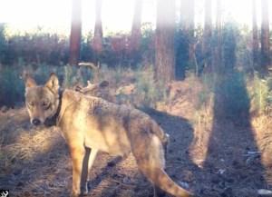 """Open oorlog tussen jagers en 'Welkom Wolf' na dood Naya: """"Fatsoen voorbij"""""""
